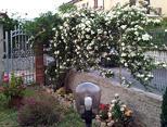 foto 5 di All'ombra del Fico - Appartamento Piccolo Casa Vacanze a Santa Maria di Castellabate