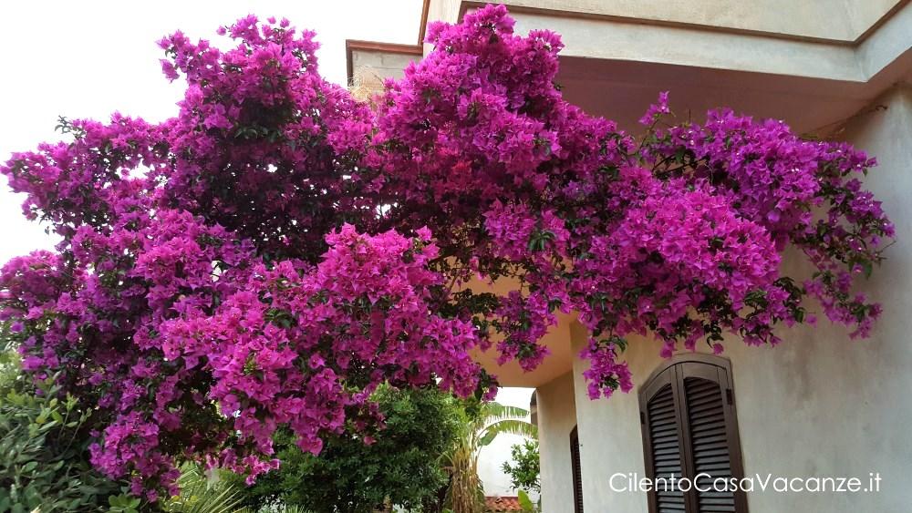 casa vacanze Santa Maria di Castellabate