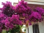 foto 9 di All'ombra del Fico - Appartamento Piccolo Casa Vacanze a Santa Maria di Castellabate